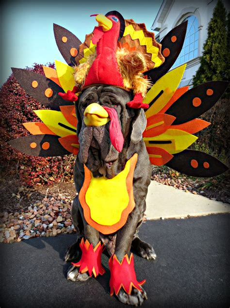 5 Ways to Make Thanksgiving Great   Pet Health Central