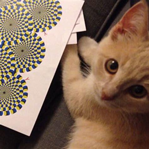 amazing cat optical illusion pictures puzzles