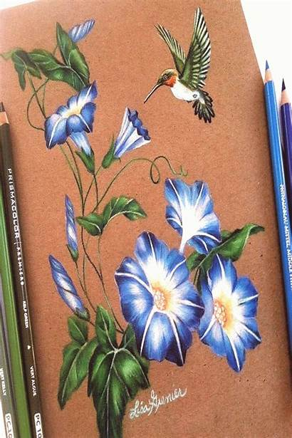 Drawing Pencil Flower Miracle Prismacolor Colored Could