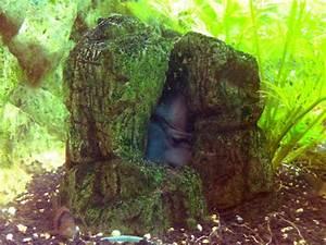 Tiere Für Aquarium : aquarium h hle sch ne dekoration und r ckzugsort ~ Lizthompson.info Haus und Dekorationen