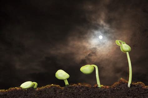 äpfel ernten nach mondkalender pflanzen s 228 en ernten h 246 herer ertrag dank mondkalender