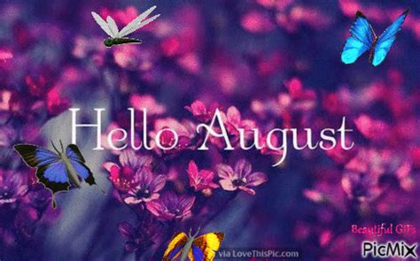 butterfly  august gif pictures   images