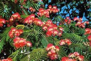 Petit Arbre Persistant : arbuste de fleurs fontaine developpement ~ Melissatoandfro.com Idées de Décoration