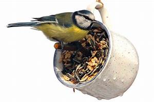 Vogelfutterspender Selber Bauen : mission gr n episode 3 futterspender f r v gel bauen nabu ~ Whattoseeinmadrid.com Haus und Dekorationen