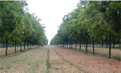 chambre agriculture aquitaine memoire l 39 agroforesterie en aquitaine benoã t