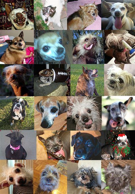 concours du chien le  laid du monde  du blog de