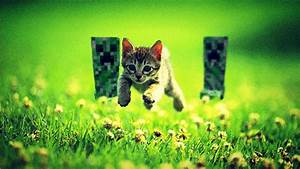 Cats, Funny, Minecraft, 1920x1080, Wallpaper, High, Quality, Wallpapers, High, Definition, Wallpapers