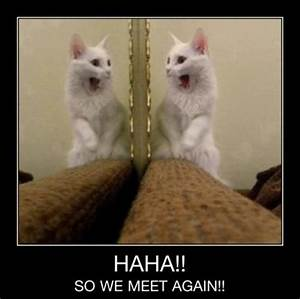 cat pics with funny captions | ... All Funny Animal ...