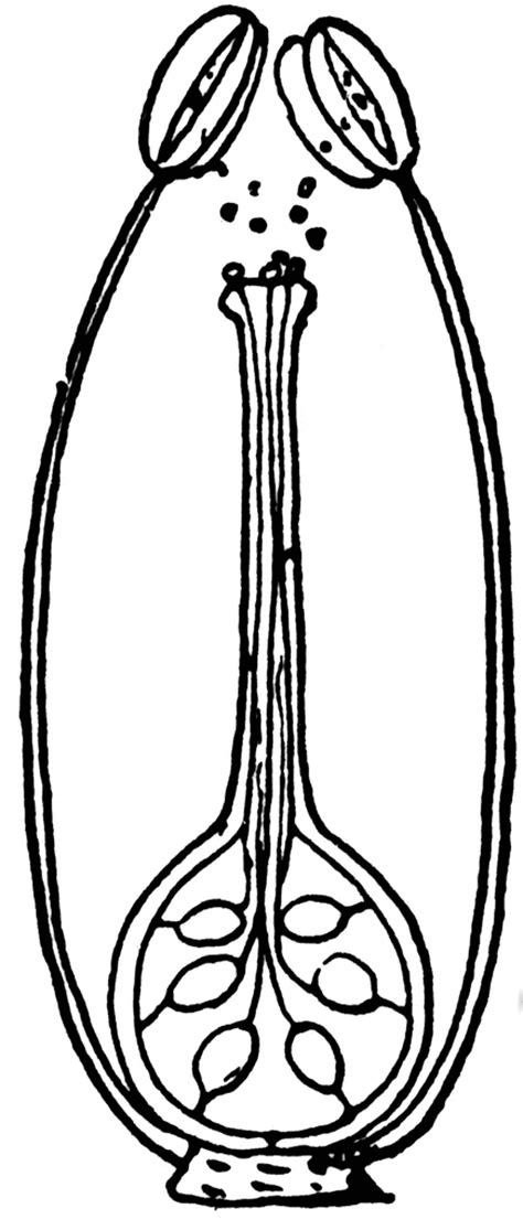 fertilization flower clipart