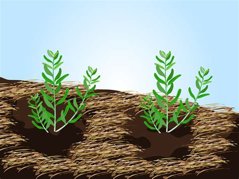 planting lavender seeds 3 ways to grow lavender from seed wikihow