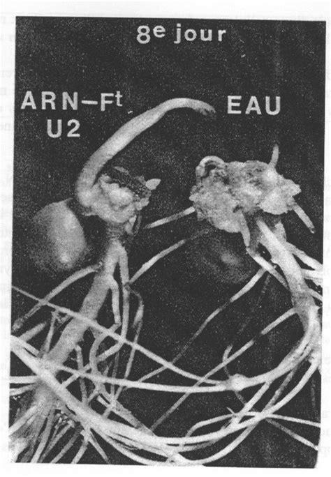 arn fragments et tumeurs vノgノtales