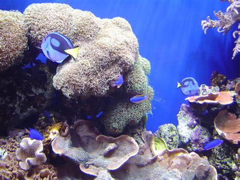 Free Stock Photo 864-coral_reef_02088.JPG | freeimageslive