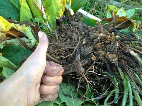 kitchen compost soil building toolkit comfrey