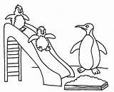 Penguin Coloring Printable sketch template