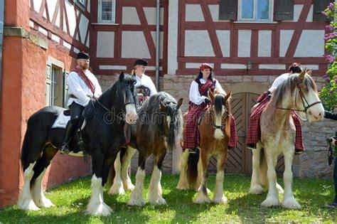 shire horse editorial quattro quatro condado cavalos calm breed largest horses four power editoriale riding