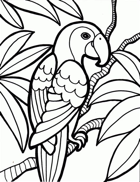 parrot coloring page coloring pictures of parrots coloring page