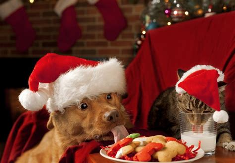 merry christmas east greenwich animal protection league