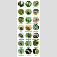 Garden Pests Identification In Australia  Pest Guru