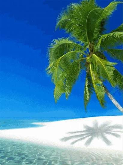 Tropical Beaches Vacation Palm Trees Backyard Scenes