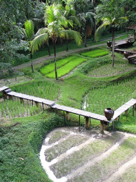 rice paddy ideas  pinterest rice terraces banaue rice terraces  philippine rice