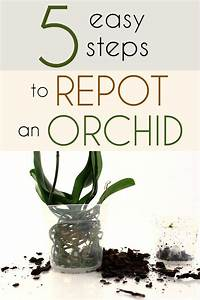 Best 25  Orchid Care Ideas On Pinterest