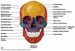 Chapter7 Axial & Appendicular Skeletal System - Health ...