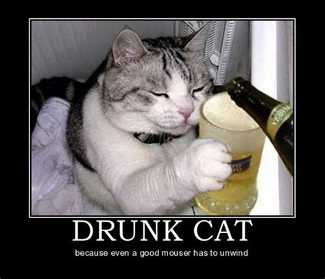 Drunk Cat Meme - the daily gouge archive friday april 17th 2015