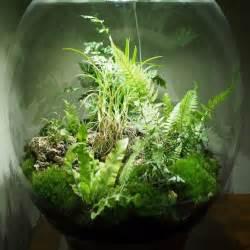Terrarium Plante Deco : terrarium plante debutant ~ Dode.kayakingforconservation.com Idées de Décoration