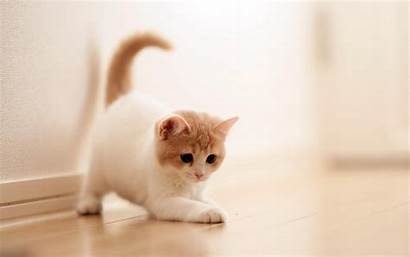 Cat Cats Wallpapers Backgrounds Background Adorable 1200