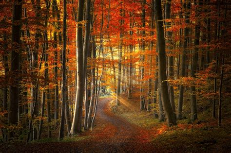 path sun rays forest fall leaves grass trees red