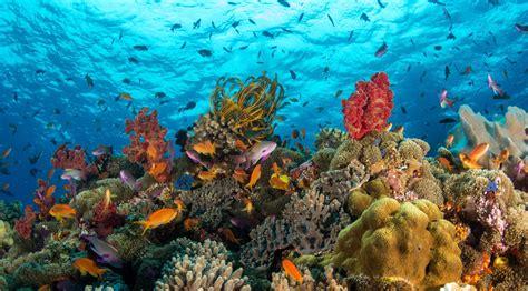 Sea Life Hd Wallpaper Background Image 2000x1107 Id