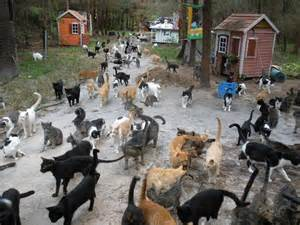 herding cats herding cats 5 excellent herding cats picture