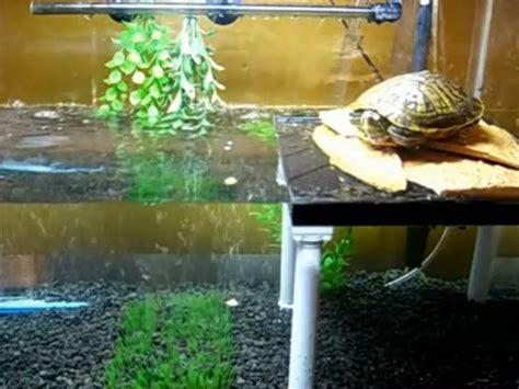 diy plastic turtle platform petdiyscom