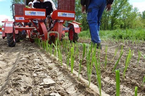 chambre agriculture du gard démonstrations de matériels maraîchers semis plantation
