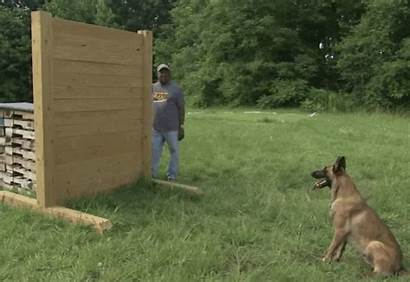 Malinois Dog Funny Breed Dogs Thats Short