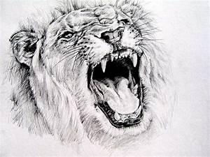 Drawn sketch lion roaring - Pencil and in color drawn ...