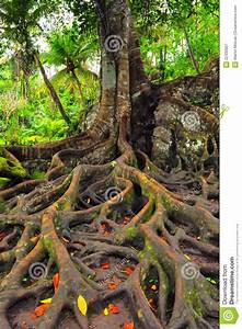 Forest, Tree, With, Roots, And, Leaves, Royalty, Free, Stock