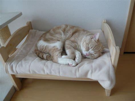 japoneses transforman camas de munecas en camas  gatos