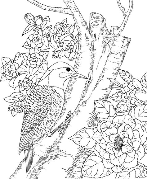 backyard animals  nature coloring books  coloring