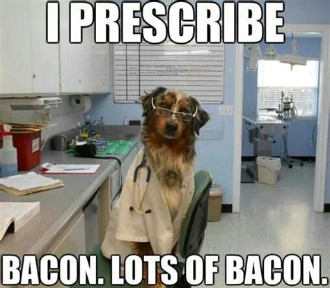 bacon funny  funny dogs  pinterest