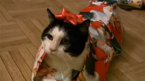 gift    cat  wrapped  christmas