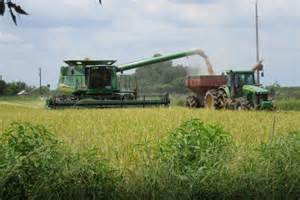 Crowley Louisiana Rice Farming In