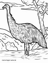 Coloring Emu Popular sketch template