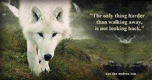 The Beauty of wolves images Love Lost HD wallpaper and