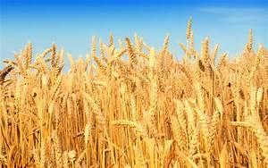 Rabi crops: PPCBL advances Rs 1.79 billion loans till ...