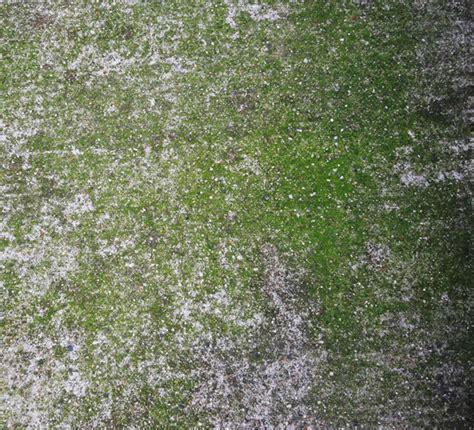 moss concrete texture set yvelle design eye