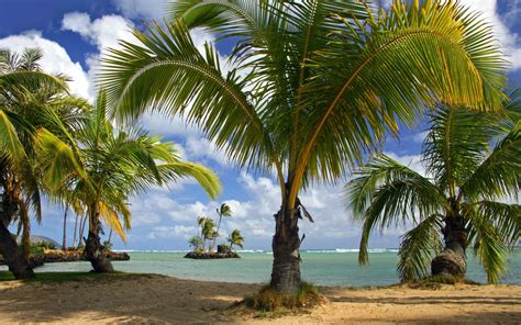 Pics Of Coconut Tree On Beach  Hd Wallpapers