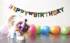 Cute Happy Birthday Images With Dogs - impremedia.net