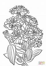 Coloring Zinnia Flowers Age Youth Printable Drawing Supercoloring sketch template