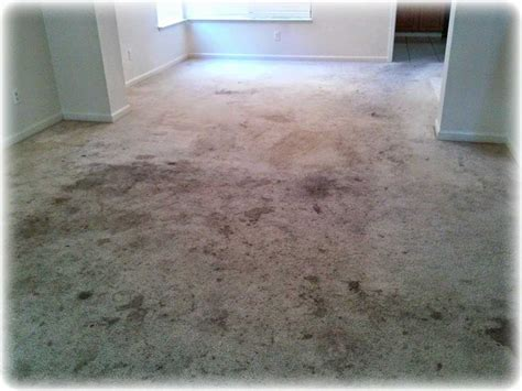 Carpet Cleaning, Repair, Tile, Grout Pictures How Much Carpet Is Needed To Cover Stairs What Does A Beetle Larvae Look Like Pupae Galaxy Cleaning Winnipeg Dust Mite Allergy Clean Grease And Oil From La Meva Carpeta Barcelona Hagopian Carpets Novi Mi